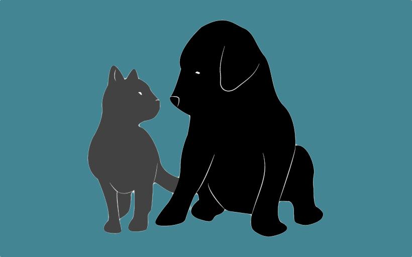 1. Sick Pets and Medication
